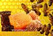 شمع العسل يرطب البشرة ويعالج الالتهابات ويحمي من الأمراض ويبني الجسم .. فوائد ومحاذير